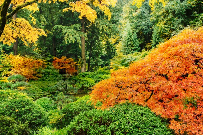 32125-cd2006-fotomeditation-herbst-mauritiusimages